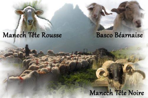 ROLP - Races Ovines Locales de Pyrénées